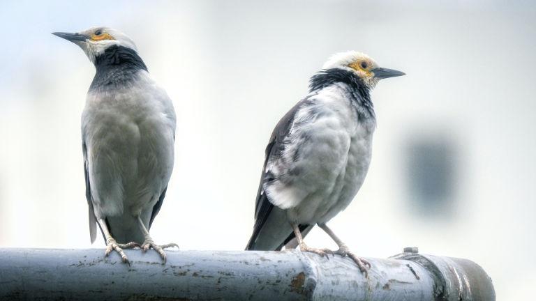 due uccelli sembrano volersi ignorare, come se avessero litigato